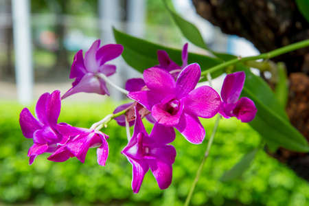 Photo pour Orchid flower in the garden - image libre de droit