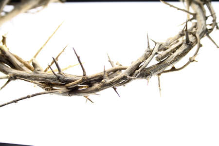 Unedited Crown of Thorns on white studio table