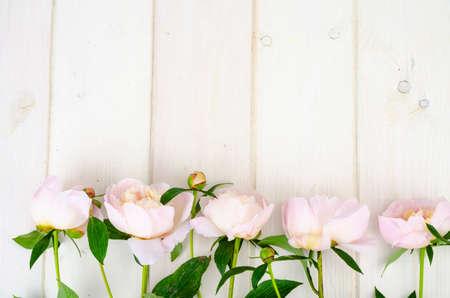 Photo pour Delicious delicate pink peonies on white wooden surface. Studio Photo - image libre de droit