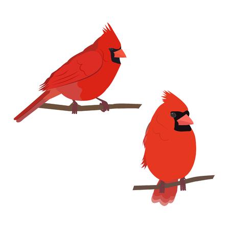 Ilustración de Vector illustration of a cardinal bird on white isolated background. Template for postcards, icons, logo, web design. - Imagen libre de derechos