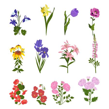 Illustration pour Set of garden flowers on a white isolated background. For decorating cards, invitations, web design. - image libre de droit
