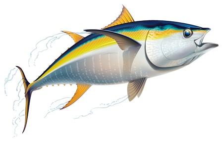 Yellowfin tuna in fast motion  Realistic vector illustration