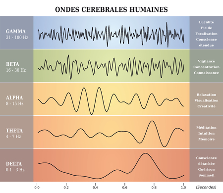 Human Brain Waves Diagram / Chart / Illustration in Frenchのイラスト素材