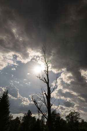 Bare tree on sky background. The sun is falling behind the clouds of storm. Natural environment  background