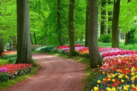 Park in The Spring Tulips  Spring landscape