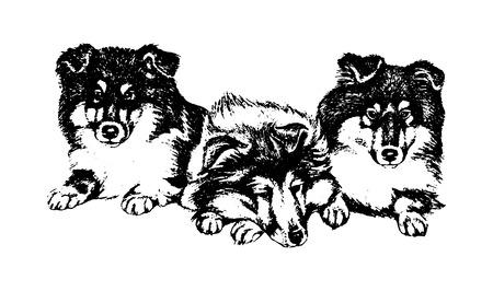 Illustration pour Vector hand drawn dog collie vintage illustration - image libre de droit