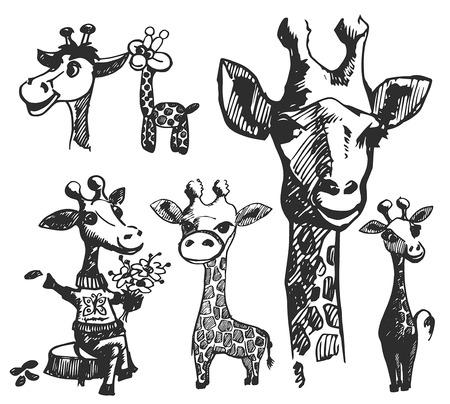 Illustration pour Vector hand drawn illustration of giraffe silhouette on white background - image libre de droit