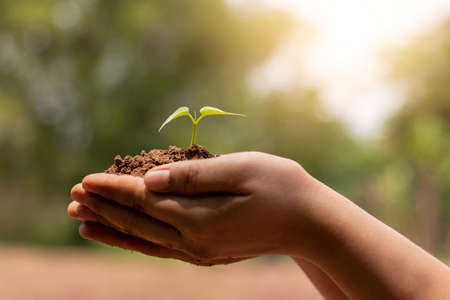 Photo pour Hand holding growing tree on blurred green nature background and sun light concept about earth day. - image libre de droit