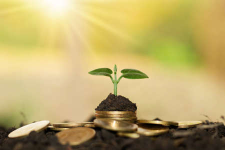 Photo pour A small tree that grows on a pile of money on the ground. - image libre de droit