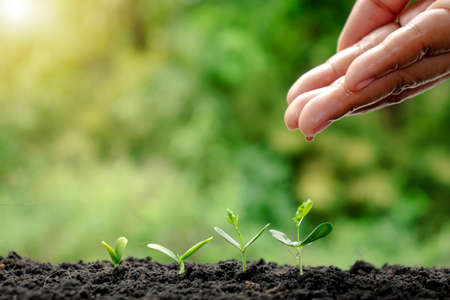 Photo pour Growing crops on fertile soil and watering plants, including showing stages of plant growth, cropping concepts, and investments for farmers. - image libre de droit