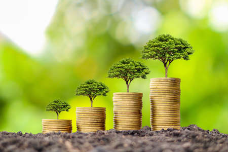Photo pour Coin pile with growing tree on top of coin, financial business success idea and money growth. - image libre de droit