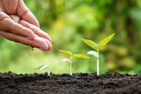 Photo pour Small plants grow on fertile soil and water the plants as well as displaying the growing stages of the plants. - image libre de droit
