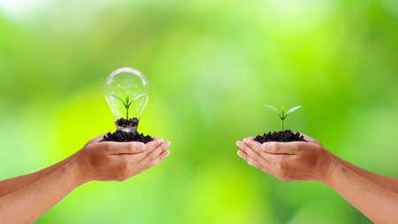 Foto de Exchange of trees and trees planted in light bulbs to save human hands energy - Imagen libre de derechos