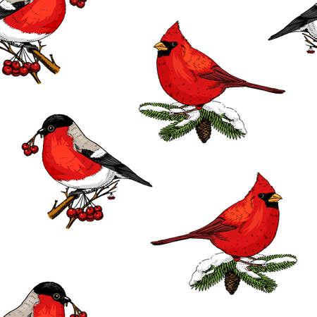 Illustration pour seamless pattern holly and bullfinch, red cardinal, birds. Merry Christmas or xmas, New Year. winter holiday decoration. engraved hand drawn in old sketch and vintage style. - image libre de droit