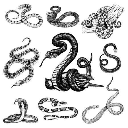 Illustration pour Set of snake illustration. - image libre de droit