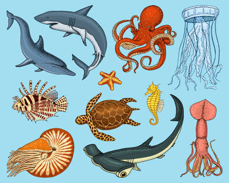 Illustration pour Fishes set or sea creature nautilus pompilius, jellyfish and starfish. octopus and squid, calamari. dolphin and hammerhead shark. - image libre de droit