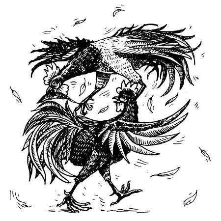 Illustration pour Cockfight or gamecocks. Bird sport on the farm. Hand drawn engraved sketch. pets in vintage style. two roosters on white background. Vector illustration. - image libre de droit