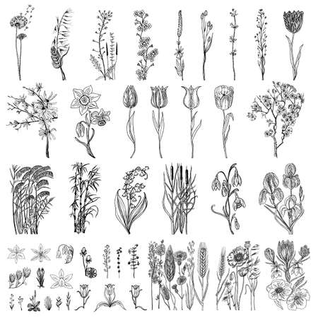 Illustration pour Wild Flowers with leaves. Set of Wedding botanical plant with leaf and buds. Botanical organic spring herb. Engraved hand drawn in doodle sketch. Collection for cards and labels, books and banners - image libre de droit