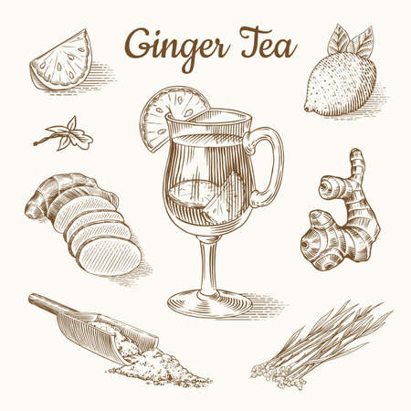 Illustration pour Ginger tea poster. Chopped rhizome or root, Fresh plant, Bag and tea in glass cup. Vector Engraved hand drawn sketch. Pieces of ingredient set. Detox spice. - image libre de droit