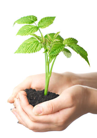young plant in hands of man. Isolation on white background.