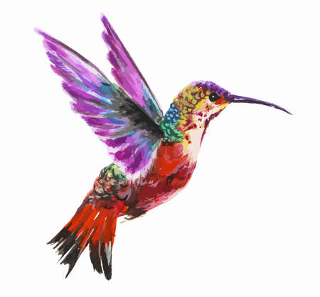 Illustration pour Isolated watercolor hummingbird on white background. Tropical bird from exotic fauna. Colorful wildlife. - image libre de droit