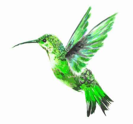 Isolated watercolor hummingbird on white background. Tropical bird from exotic fauna. Colorful wildlife.のイラスト素材