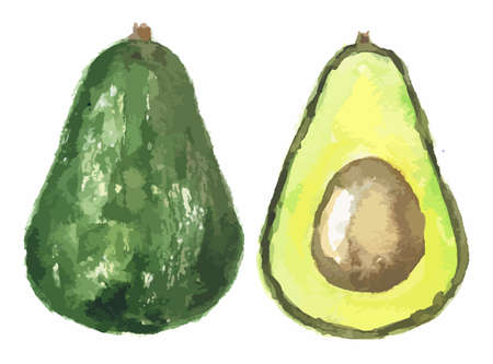 Illustration pour Watercolor halved avocado. Fresh and healthy fruit with vitamins and soft texture. Natural vegan food. - image libre de droit