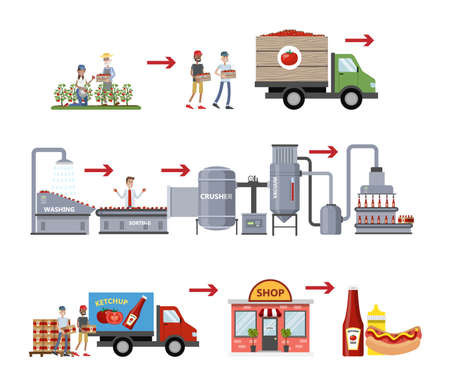 Ilustración de Ketchup manufacture process. Tomato sauce industry. Growing tomatoes, sorting, sending vegetables to factory, packaging bottles with ketchup and distribution. Isolated vector flat illustration - Imagen libre de derechos