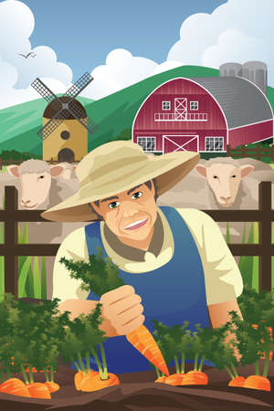 A vector illustration of farmer harvesting carrots in a farmのイラスト素材