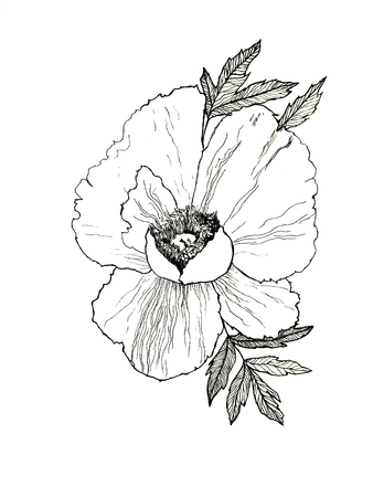 Hand drawn black and white illustration of peony