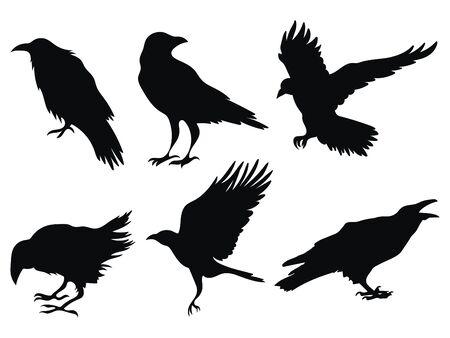 Illustration pour Set of ravens. A collection of black crows. Silhouette of a flying crow. Vector illustration of ravens silhouette. Grunge bird tattoo. - image libre de droit