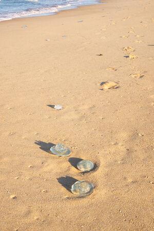 Jellyfish on the beach at Dicky Beach - Sunshine Coast, QLD.