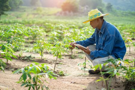 Foto per Businessman farmer holding tablet standing in cassava field. Smart farmer concept. - Immagine Royalty Free
