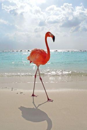 Flamigo at tropical beach
