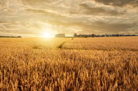 Photo pour Golden wheat field and road on sunset - image libre de droit
