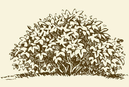 Illustration pour Cute big green deciduous bush with lush foliage. Vector monochrome freehand sketchy linear ink drawn backdrop in style pen on paper with space for text on sky - image libre de droit
