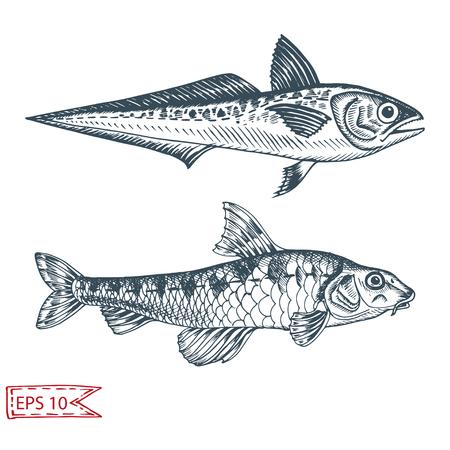 Illustration pour Hand drawn sketch illustration with fish. Wildanimal vector. Restaurant food card for seafood menu. Ocean life. - image libre de droit