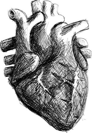 Realistic Black and White Hand-drawn Human Heart Sketch