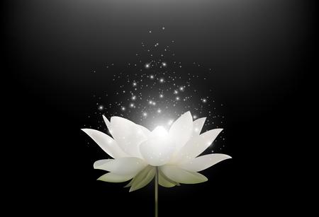 Vector illustration of Magic White Lotus flower on black background