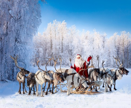 Santa Claus are near his reindeers in snowy forest.