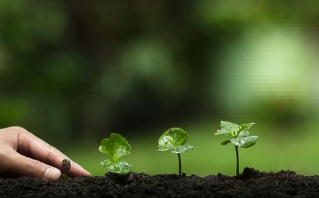 Photo pour Plant a tree in nature,coffee tree,fresh, - image libre de droit