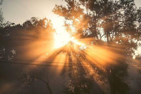 Photo for Morning light, sunrise and fog in nature,sun light - Royalty Free Image