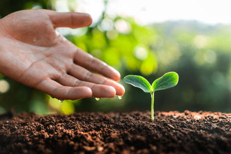 Photo pour Young trees are growing on the soil in nature - image libre de droit