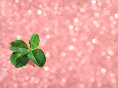Photo for Fresh green lucky four leaf clover on pink sparkling bokeh background. Design for your ad, poster, banner. Beautiful st patrick's day concept - Royalty Free Image