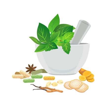 Illustration pour Traditional medicine - Fresh and dried herbs for medicine. - image libre de droit