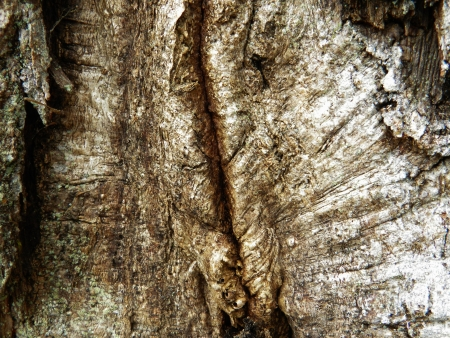 bark, cortex, cork