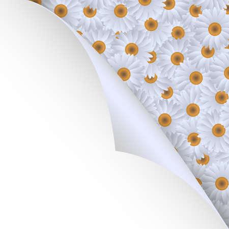 White chamomiles and paper corner.Vector eps10