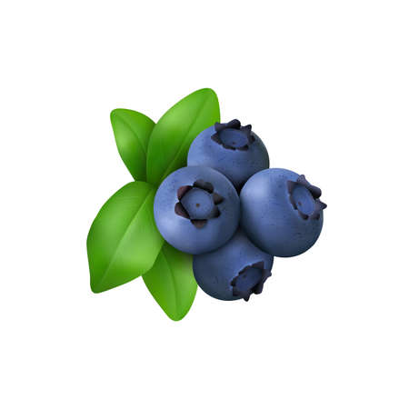 Illustration pour Blueberry with leaves  isolated on white background. Realistic Vector illustration - image libre de droit