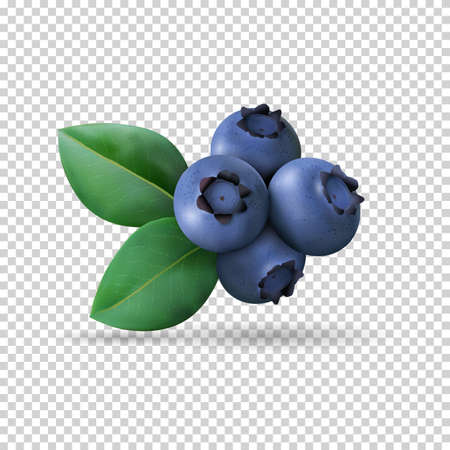 Illustration pour Blueberry with leaves isolated on transparent background. Realistic Vector illustration - image libre de droit