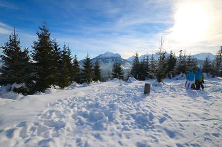 Photo for Winter forest in the mountains - Royalty Free Image